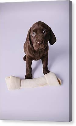 Puppy Sitting By A Bone Canvas Print by Design Pics