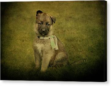 Puppy Sitting Canvas Print by Sandy Keeton