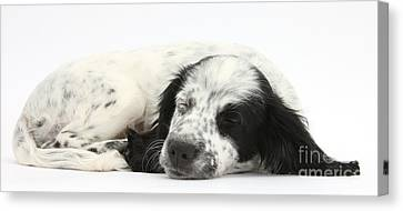 Puppy Sleeping Canvas Print by Mark Taylor