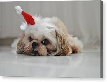 Puppy Wearing Santa Hat Canvas Print by Sonicloh