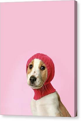 Puppy With Hat Canvas Print by Retales Botijero