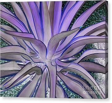 Purple Aloe Canvas Print