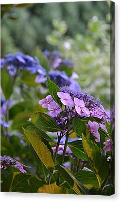 Purple And Green Canvas Print by Bonnie Myszka