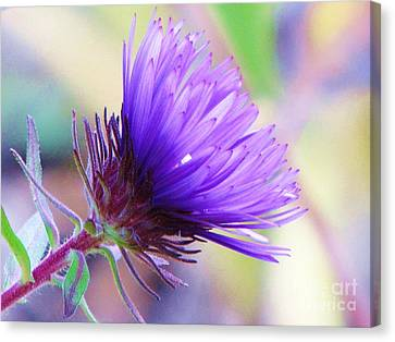 Canvas Print featuring the photograph Purple Aster  by Michele Penner