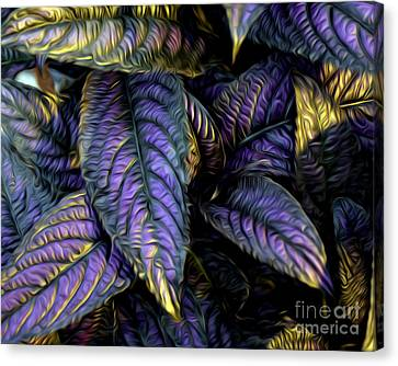 Purple Beauties Canvas Print by Anne Raczkowski