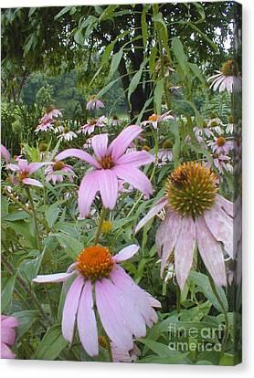 Purple Coneflowers Canvas Print by Vonda Lawson-Rosa