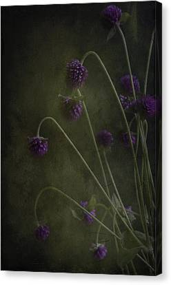 Purple Drops Canvas Print by Carolyn Dalessandro