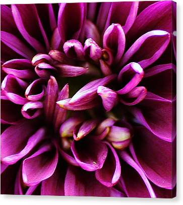 Purple Explosion Canvas Print by Bruce Bley