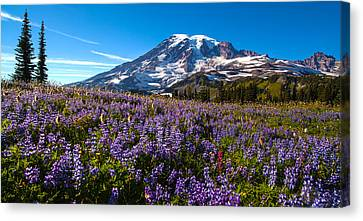 Purple Fields Forever Canvas Print by Mike Reid