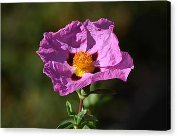 Canvas Print featuring the photograph Purple Flower by Rima Biswas