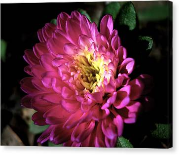 Purple Flower Canvas Print by Sumit Mehndiratta