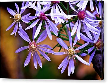 Purple Flowers Canvas Print by Andre Faubert