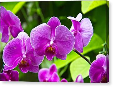 Purple Flowers In A Bunch Canvas Print