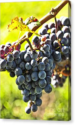 Purple Grapes Canvas Print by Elena Elisseeva
