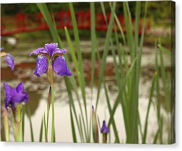 Canvas Print featuring the photograph Purple Iris by Coby Cooper