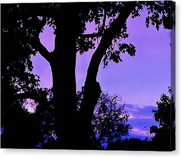Purple Morning Canvas Print by Todd Sherlock