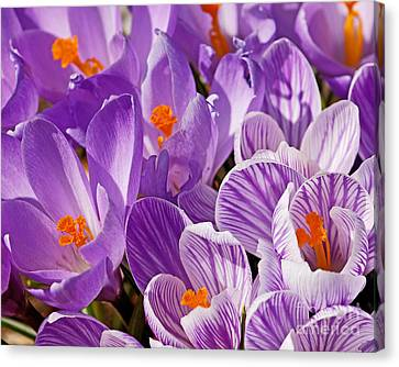 Purple Oh Purple Canvas Print