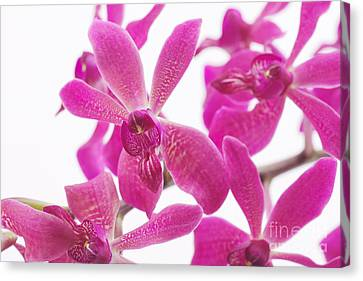 Purple Orchid Canvas Print by Atiketta Sangasaeng