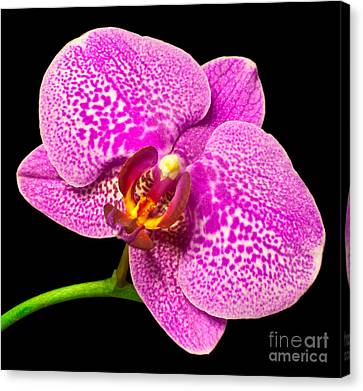 Canvas Print featuring the photograph Purple Orchid Bloom by Michael Waters