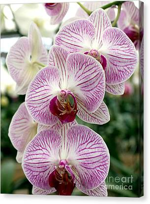 Canvas Print featuring the photograph Purple Orchids by Debbie Hart