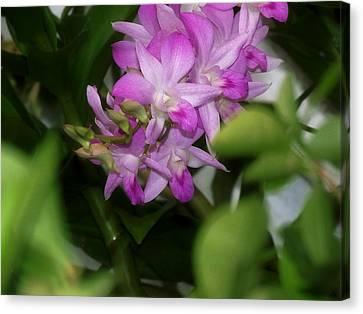Purple Orchids Canvas Print by Dumindu Shanaka