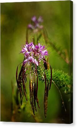 Canvas Print featuring the photograph Purple Pizzazz by Vicki Pelham