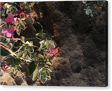 Canvas Print featuring the photograph Purple Sage And Desert Rock In Morning Light by Louis Nugent