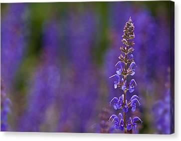 Purple Spires Canvas Print by Trevor Chriss