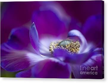 Close Focus Floral Canvas Print - Purple Spring by Jacky Parker