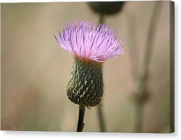 Canvas Print featuring the photograph Purple Thistle by Donna  Smith