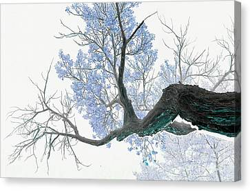 Purple Tree 1 Canvas Print by Rebecca Margraf