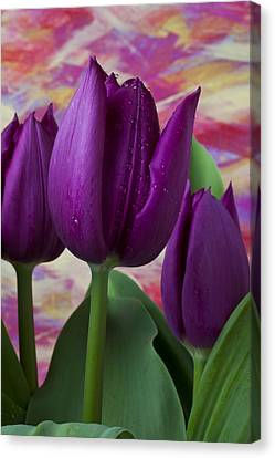 Old Wall Canvas Print - Purple Tulips by Garry Gay