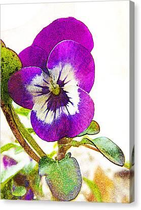 Purple Viola Canvas Print by Robin Hewitt