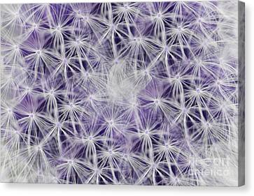 Purple Wishes Canvas Print by Traci Cottingham