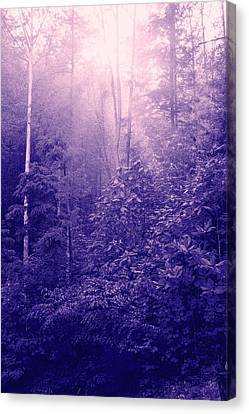 Purple Woods Canvas Print by Nina Fosdick