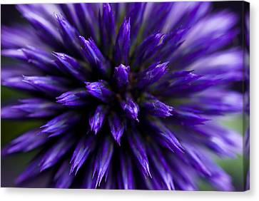 Canvas Print featuring the photograph Purple Zoom by Trevor Chriss