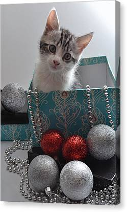 Purr-fect Christmas. Canvas Print by Terence Davis