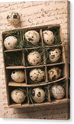 Cardboard Canvas Print - Quail Eggs In Box by Garry Gay