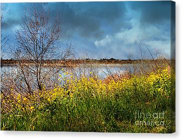 Quarry Lakes In Fremont California . 7d12643 Canvas Print by Wingsdomain Art and Photography
