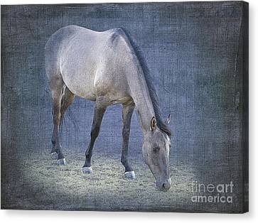 Quarter Horse In Blue Canvas Print by Betty LaRue