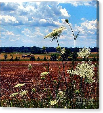 Queen Annes Lace And Hay Bales Canvas Print by Julie Dant