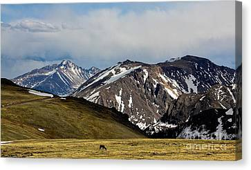 Canvas Print featuring the photograph Quiet Acres by Everett Houser