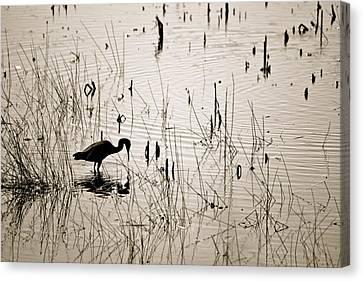 Quiet Findings Canvas Print by Jennifer  Lane