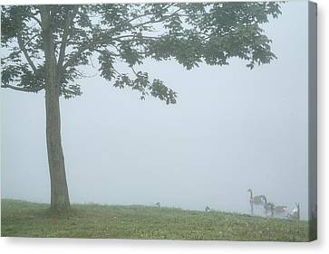 Quiet Fog Rolling In Canvas Print by Karol Livote