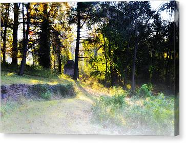 Quiet Morning In The Woods Canvas Print by Bill Cannon