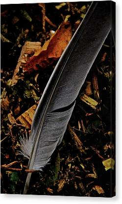 Quill Canvas Print by Odd Jeppesen
