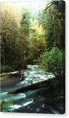 Quineault Rain Forest Canvas Print