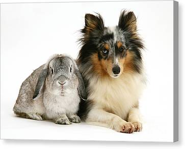 Rabbit And Dog Canvas Print by Jane Burton
