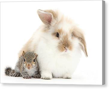 Rabbit And Squirrel Canvas Print by Mark Taylor