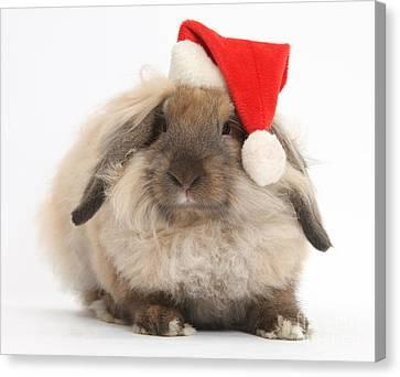 Rabbit Wearing Christmas Hat Canvas Print